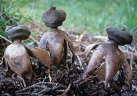 Один из самых редких грибов обнаружен в России
