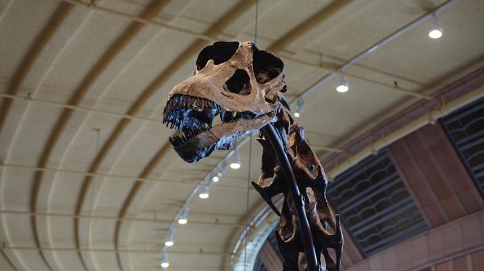 Специалисты назвали эти останки наиболее северными из известных следов пребывания зауроподов