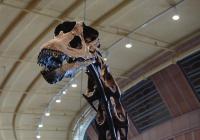 Самые северные травоядные динозавры найдены в России