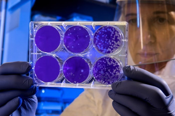 Данный микроорганизм может существовать в условиях высокой температуры и кислотности и потреблять сульфид железа, удаляя его из угля