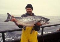 Искусственный рыбный фарш появится в России
