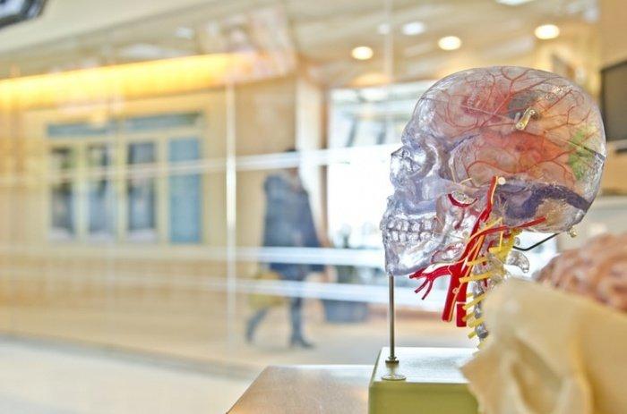 Сыры твердых сортов могут спровоцировать рост давления и мигрень, так как в нем есть тирамин. Для головного мозга данный продукт вреден, и им лучше не злоупотреблять