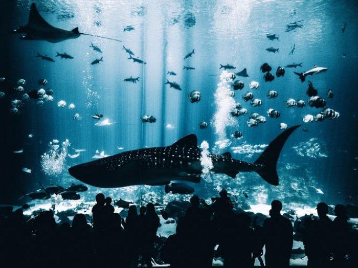 Авторы программы надеются, что аквариум будут посещать практически 1,5 млн. человек ежегодно