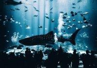 Самый большой аквариум появится в России