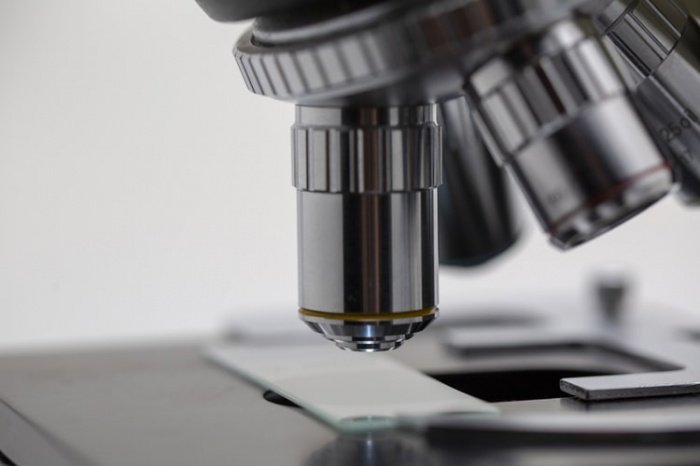 Теломераза — это фермент, который добавляет на концевые участки хромосом — теломеры — особые повторяющиеся последовательности нуклеотидов. Предполагается, что удлинение данных участков способно помочь остановить старение