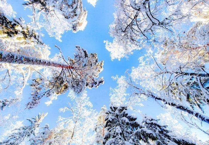 Такая неоднородность, по словам Вильфанда, ожидается в европейской части страны и в Западной Сибири