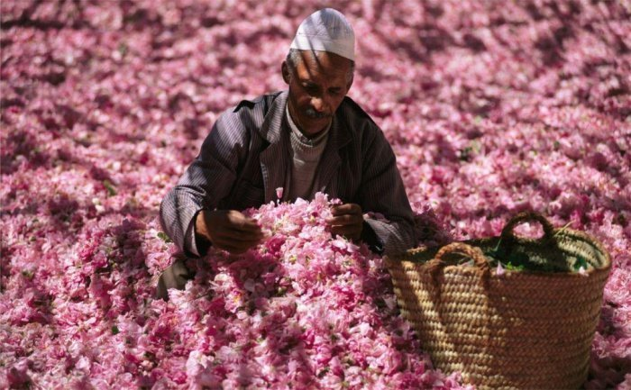 Дамасская роза вошла в список нематериального наследия ЮНЕСКО.