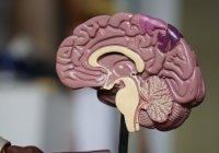 Ученые рассказали, как йога влияет на мозг
