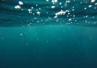 Воск для очистки океана создали в Австралии