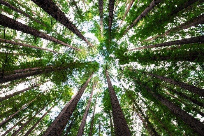 Авторы проекта намерены высаживать 8 разных видов деревьев, чтобы тем самым компенсировать выбросы углерода в Северной Америке