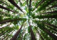 В Канаде предложили сажать деревья с помощью беспилотников