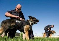 США запретили поставки Иордании и Египту служебных собак