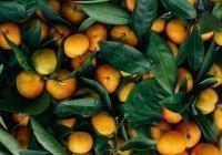 Специалисты сообщили, как выбрать мандарины