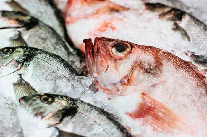 Ученые утверждают, что минус выращенной в неволе рыбы в том, что в ней в 2-2,5 раза больше жира, чем в дикой