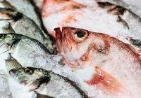 Обнаружено, какую рыбу ни в коем случае нельзя есть