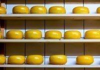 Установлен вред употребления плавленого сыра
