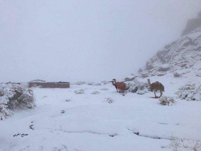 В Саудовской Аравии неожиданно выпал снег