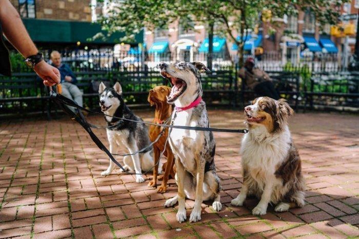 Благодаря собакам снижается риск психических заболеваний