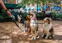 Собаки помогают людям избежать шизофрении