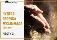 Спасение от голода: непридуманные чудеса Пророка Мухаммада (ﷺ)