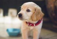 Неоновый щенок появился на свет в США