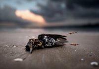 Горячая капля стала причиной гибели миллиона живых существ