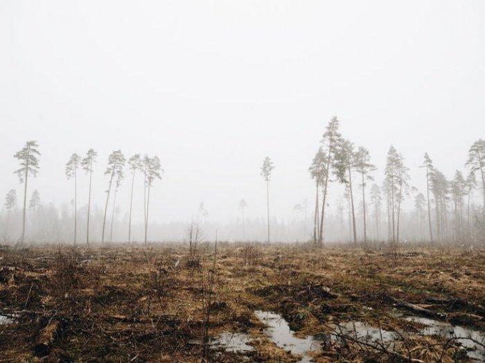 Из-за небольшого снежного покрова и ранней весны пожароопасный период времени в лесах может наступить намного раньше и продлиться дольше