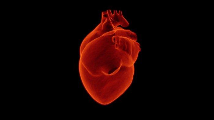 Фибрилляция предсердий — довольно распространенная форма аритмии, но она в 6 раз повышает риск сердечной недостаточности и инсульта