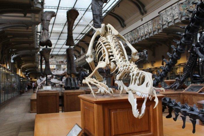 В челюстях динозавра найдены крупные острые зубы, что говорит о его хищнической натуре