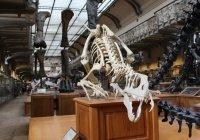 Ученые воссоздали облик дромеозаврида