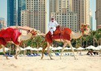 Уровень счастья жителей Дубая достиг 85%