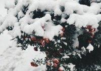 Синоптики прогнозируют «розовый» февраль в России
