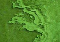 В Челябинске позеленела река