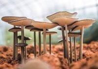 Обнаружены следы древнейших грибов на планете