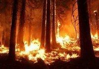 Эксперты предсказали рост выбросов углекислого газа из-за пожаров