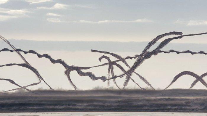 Испанский фотограф показал, как в небе выглядят следы птиц