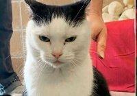 В США ищут нового владельца для «худшего кота в мире»