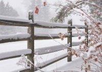 Ученые сообщили, какие зимы ждут Россию в будущем