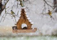 В Гидрометцентре сообщили о погоде в феврале
