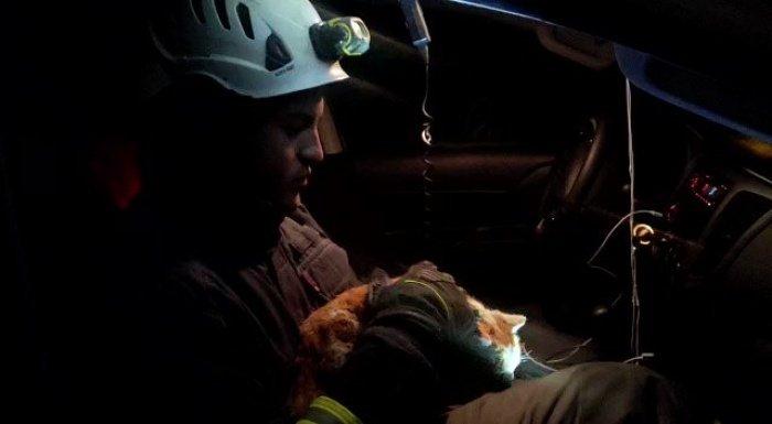 Фото раненого животного облетело местные социальные сети.