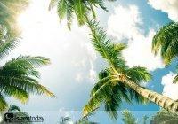 Почему Пророк (ﷺ) сравнил мусульман с пальмами?