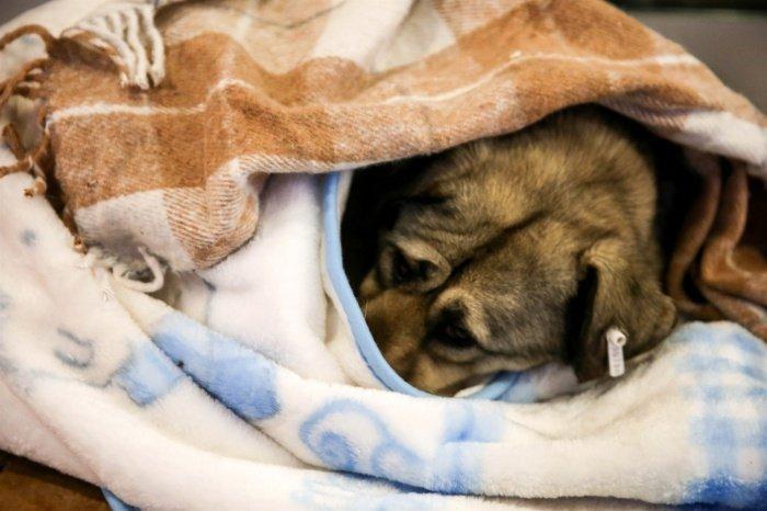 Парламент Турции работает над ужесточением наказание за издевательства над животными.