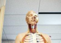 Выяснилось, кому стоит опасаться рака щитовидной железы