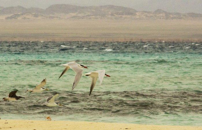 По словам ученых, уровни содержания пропана и этана в воздухе над северной частью Красного моря в 40 раз больше, чем прогнозировалось с учетом региональных антропогенных выбросов