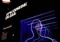 Ученые выявили, как изучение языков влияет на мозг