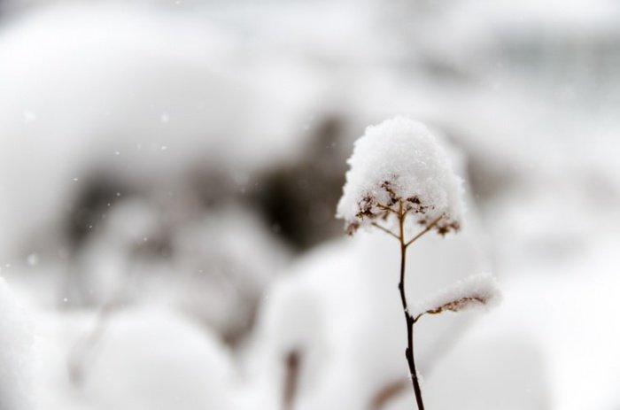 На горном массиве Голия и в горах близ города Кралево снегопад не прекращается больше 30 часов