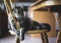 В Челябинске кот спас пенсионерку из пожара