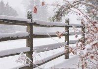 Синоптики сообщили, насколько оправдался прогноз на зиму