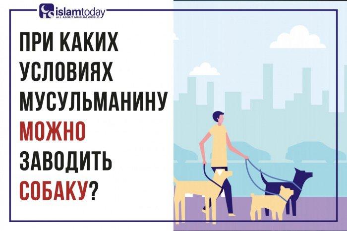 Как Ислам относится к собакам?