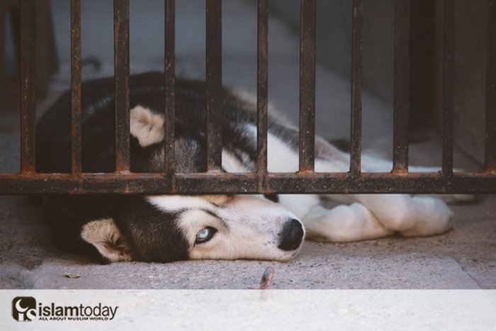 Как относиться к животным по Исламу? (фото:unsplash.com )